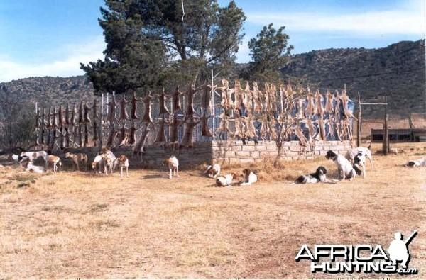 58 Days Take - Predator Control Tarkastad East Cape