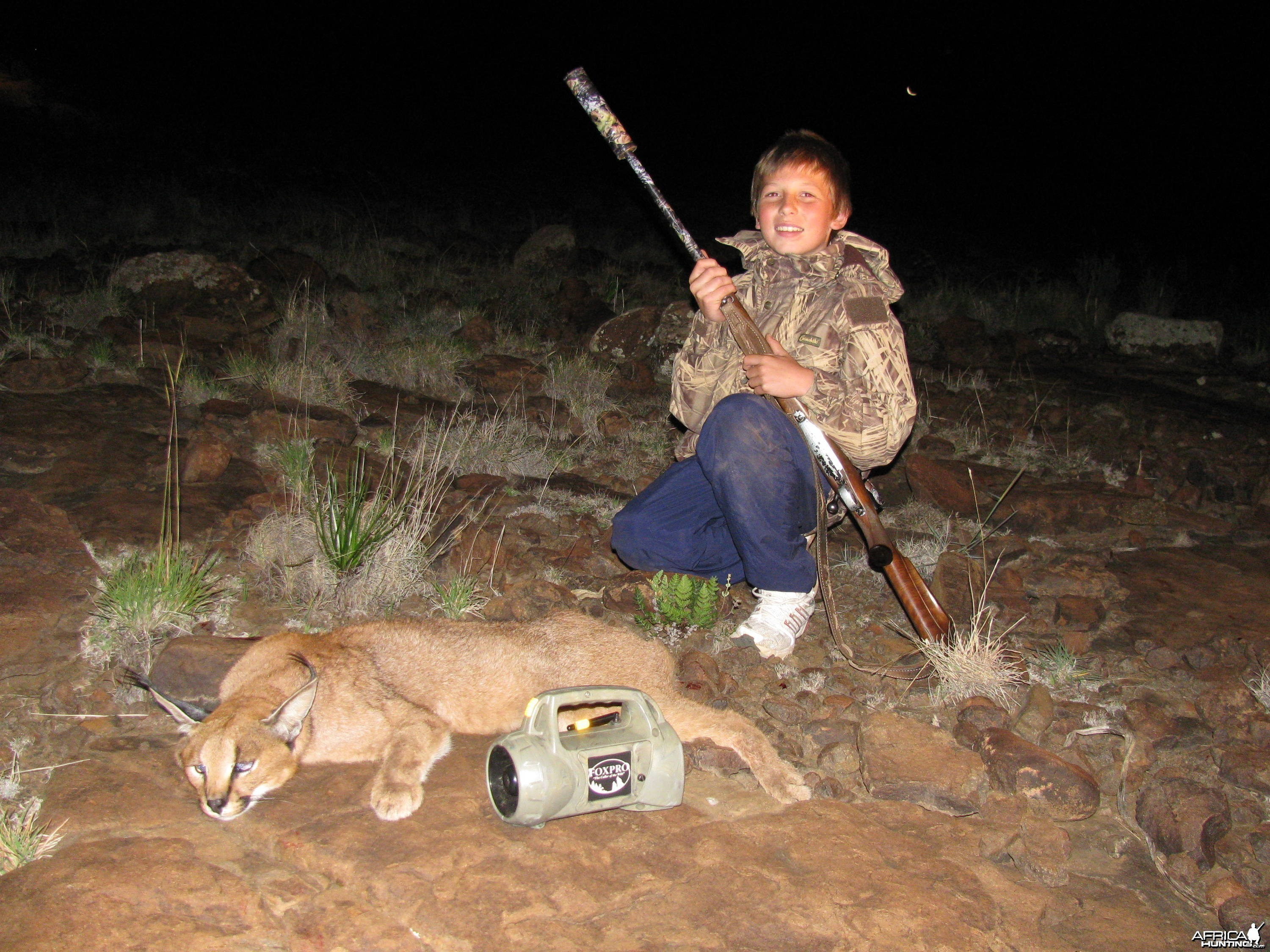 Large Male Caracal - Predator Calling East Cape