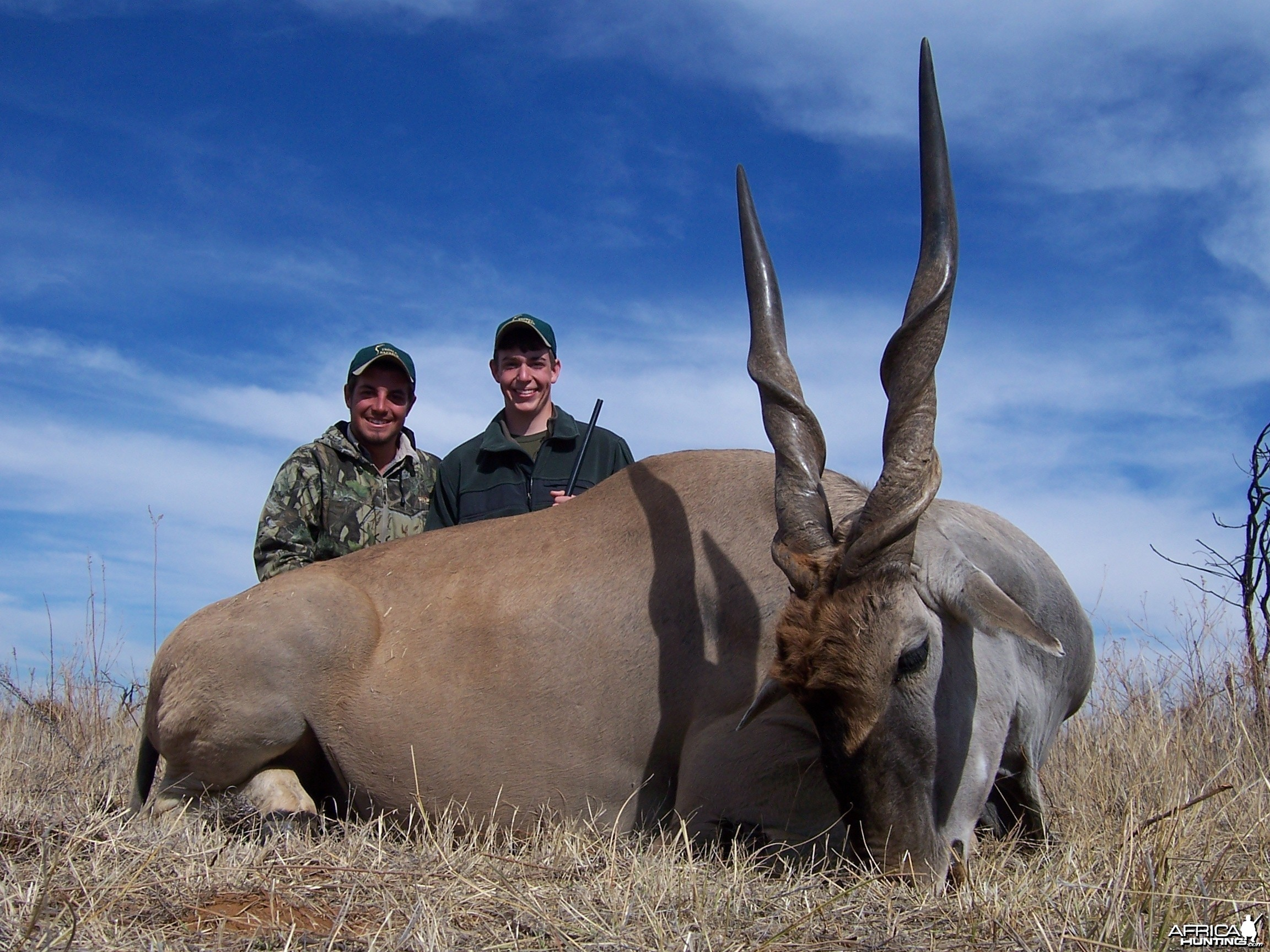 Cape Eland hunted with Hartzview Hunting Safaris