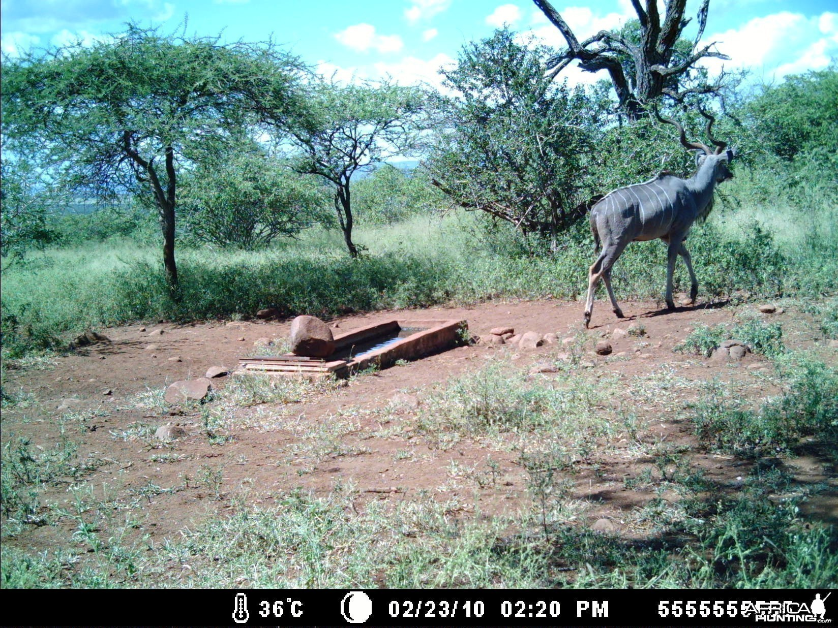 Greater Kudu leaving waterhole