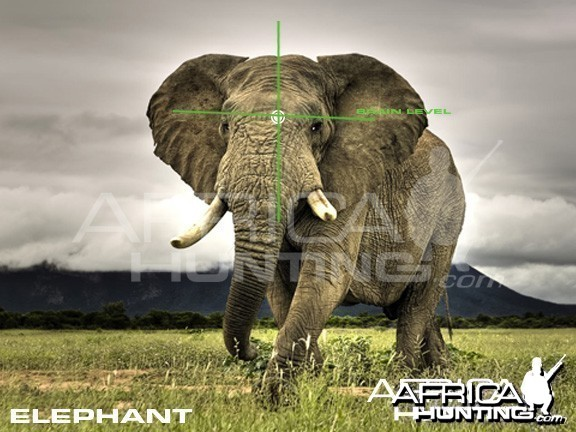 Hunting Elephant Quater View Shot Placement