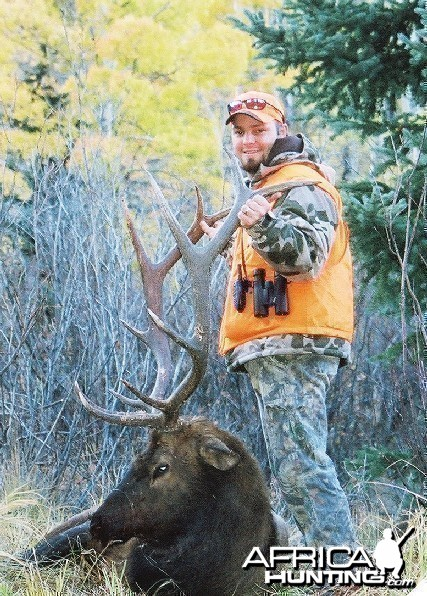 Colorado Elk