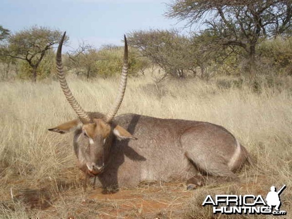 Hunting Waterbuck South Africa - 30 inches - Northern Cape Province