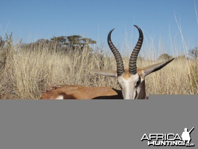 Hunting Springbok in South Africa