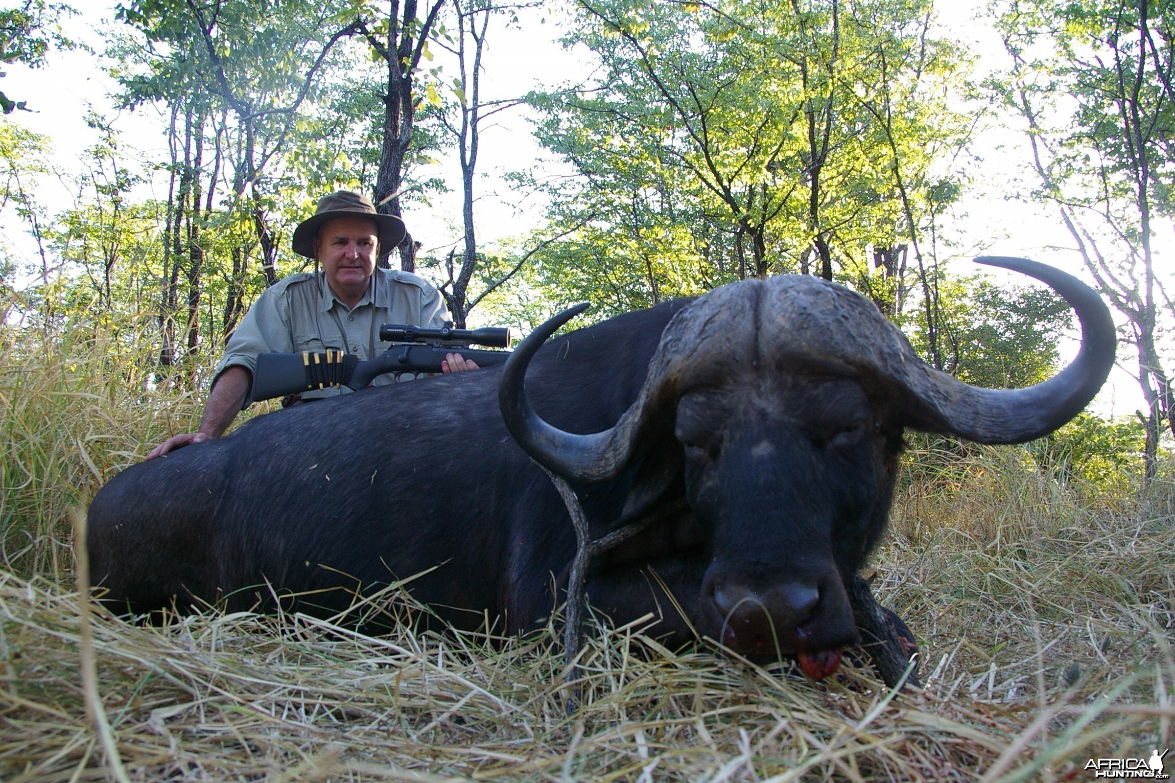 Buffalo hunting in the South Luangwa area of Zambia - 40 inch horns