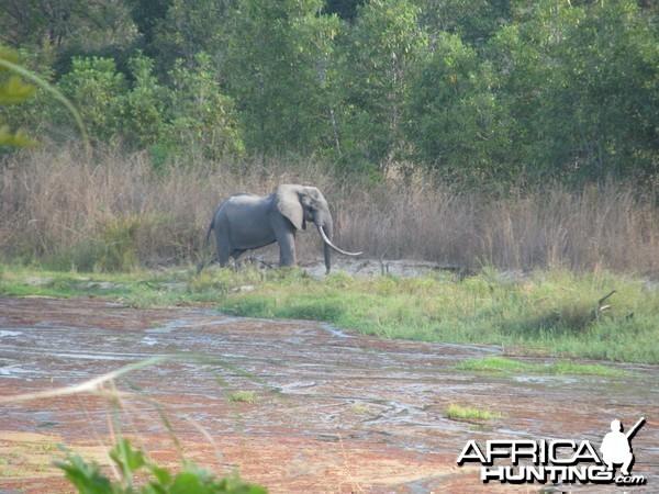 Elephant estimated to be oner a hundred pound