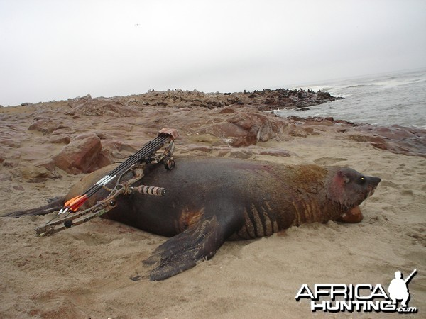 Hunting Seal in Namibia