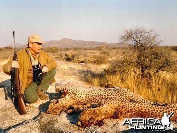 Hunting Cheetah Namibia