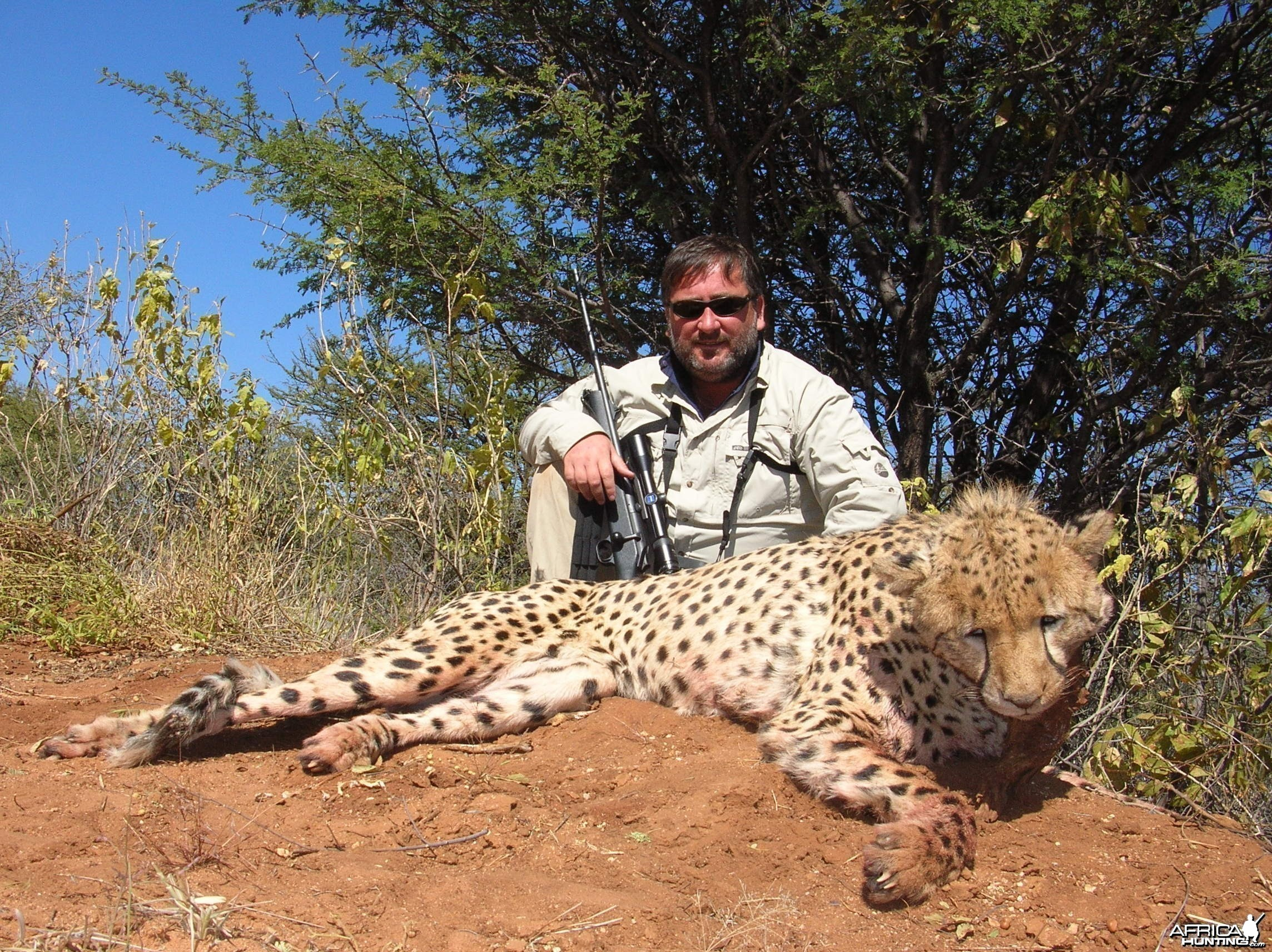 Cheetah Hunting Namibia