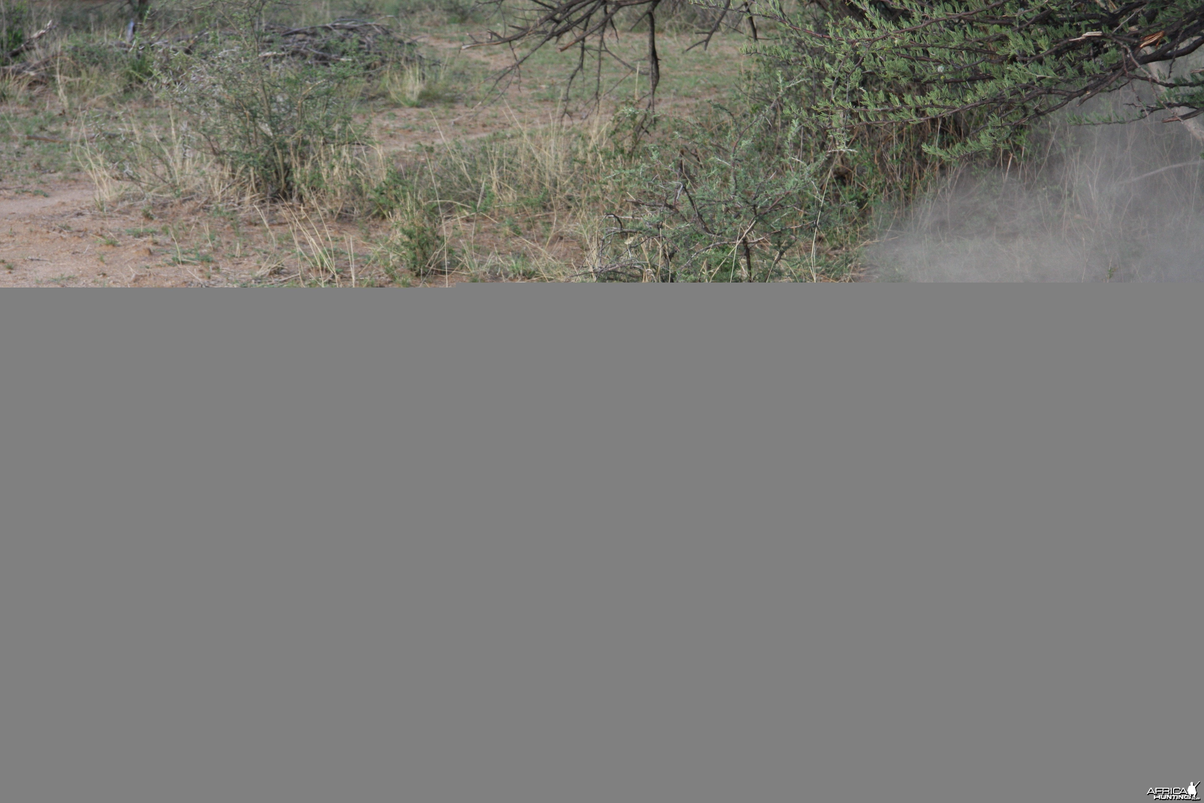 Black Mamba in Namibia