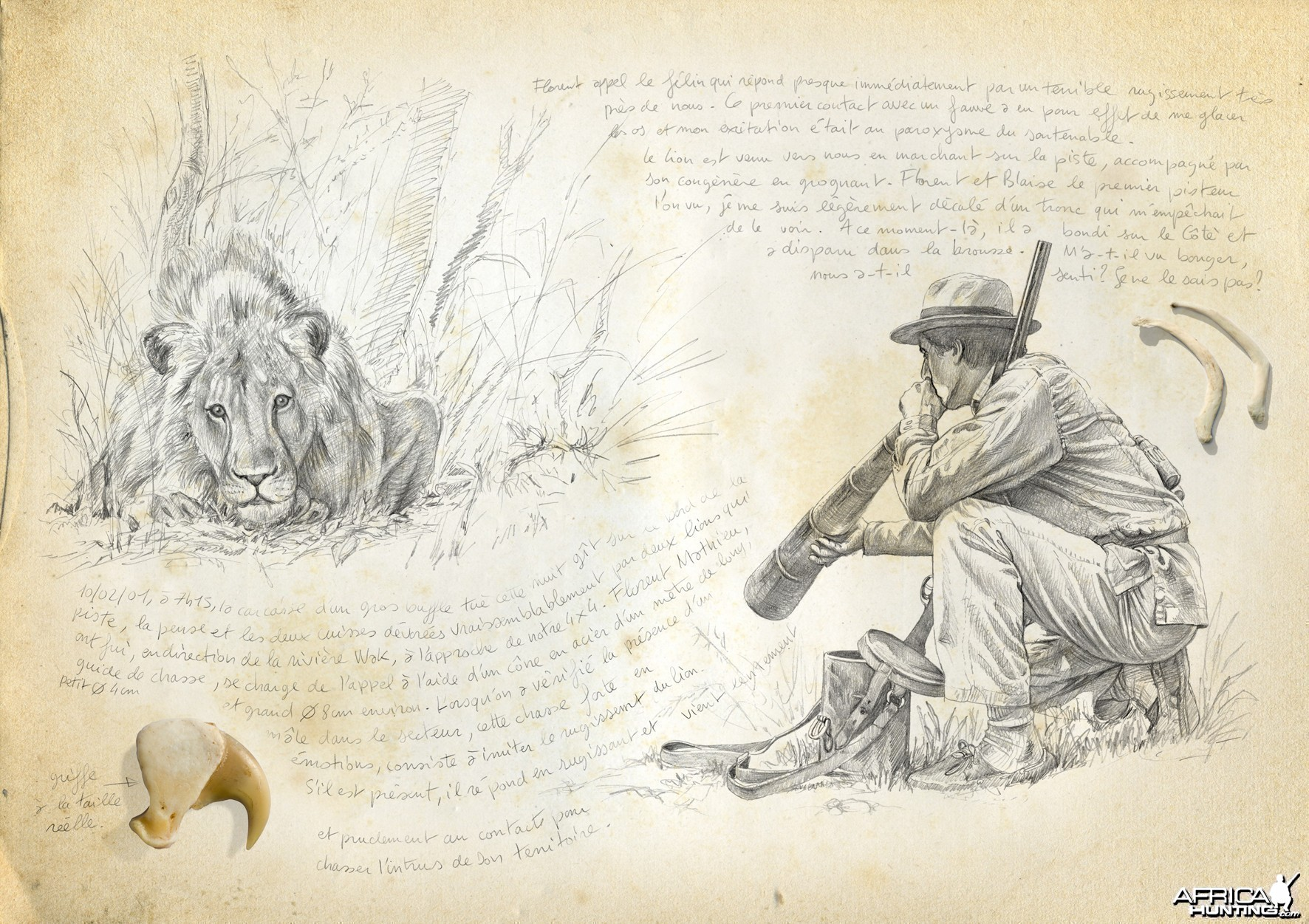 Wildlife Artist Marcello Pettineo - Lion Calling