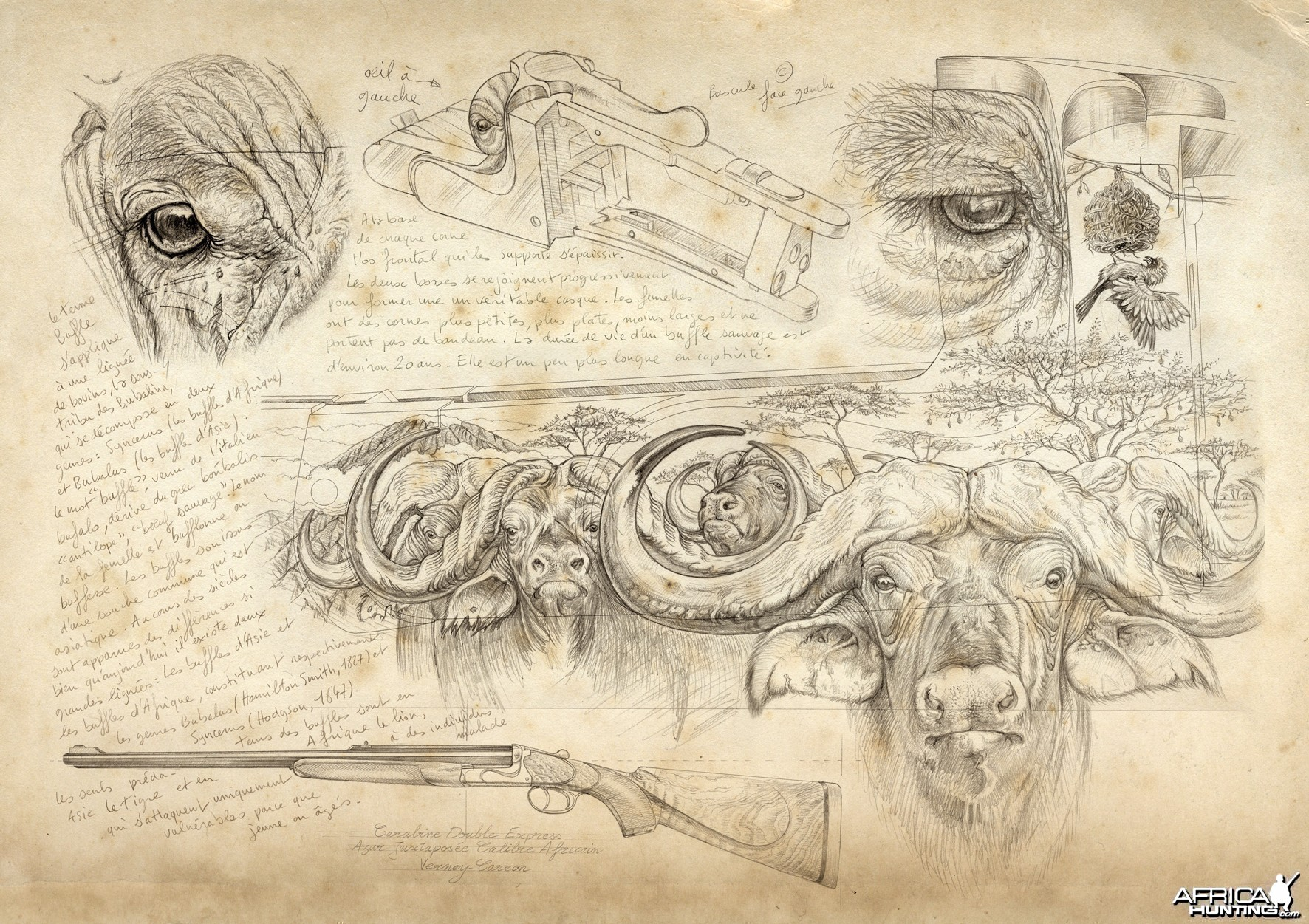 Wildlife Artist Marcello Pettineo - Buffalo Gun Engraving