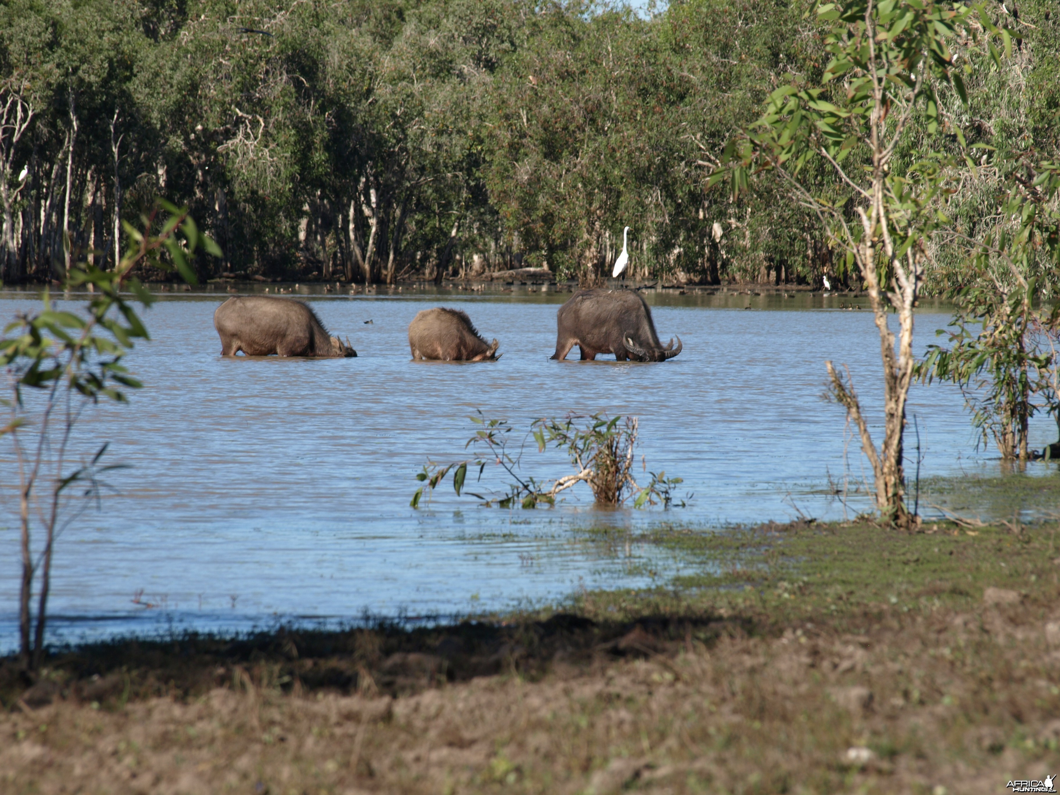 Arnhemland scenery & wildlife.
