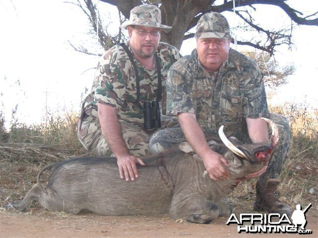 Warthog - Bushwack Safaris
