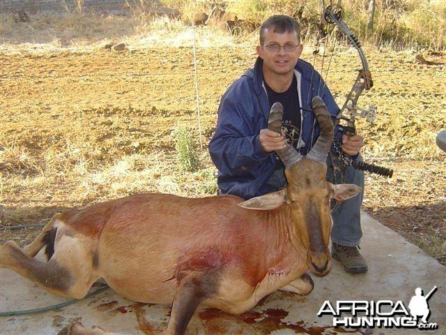 Hartebeest - Bushwack Safaris