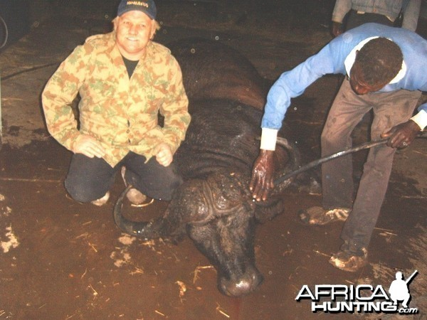 Cape Buffalo -  Bushwack Safaris