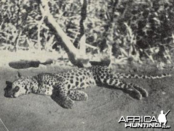 Man-Eating Leopard