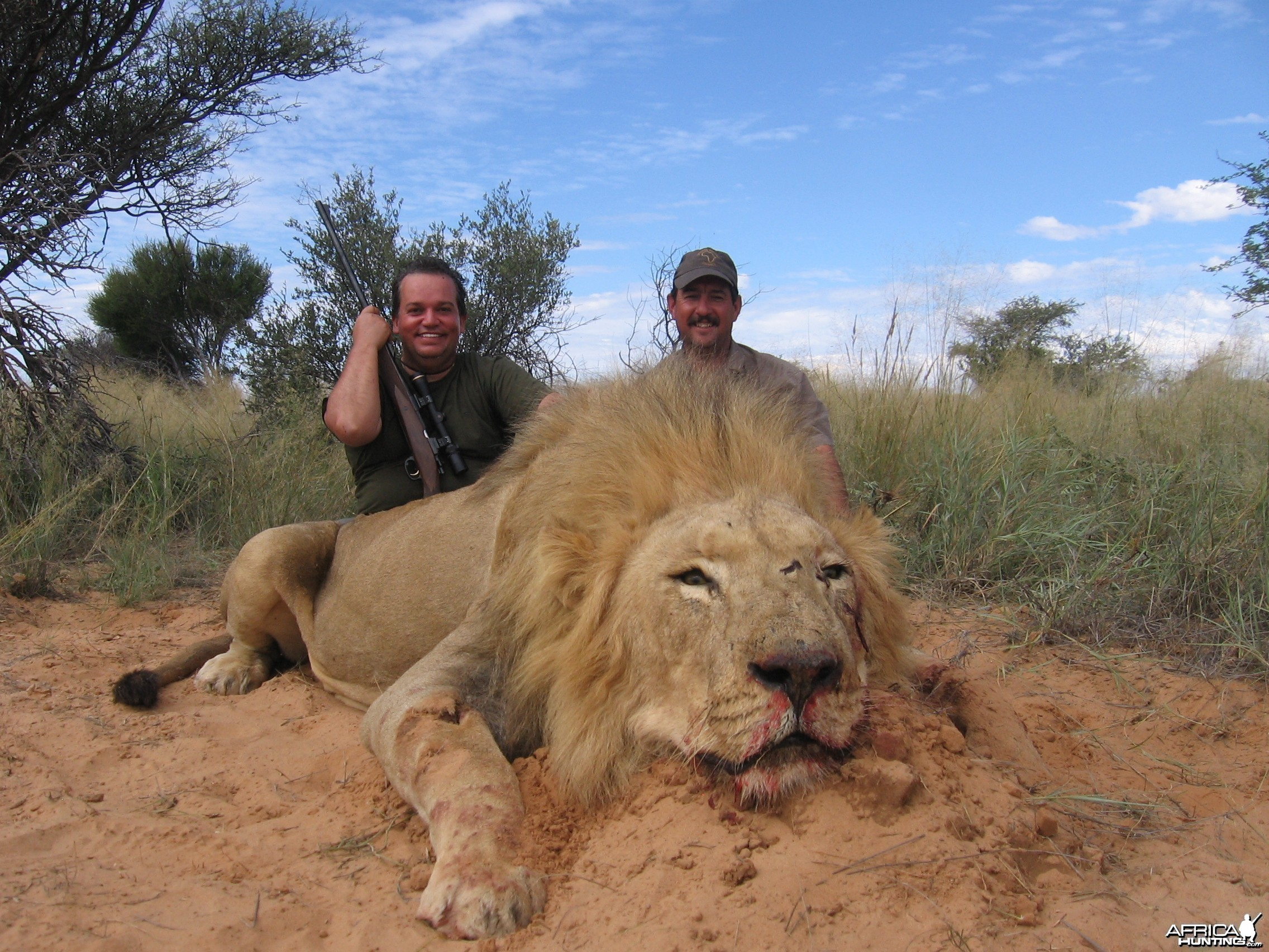 My first Lion - South Africa