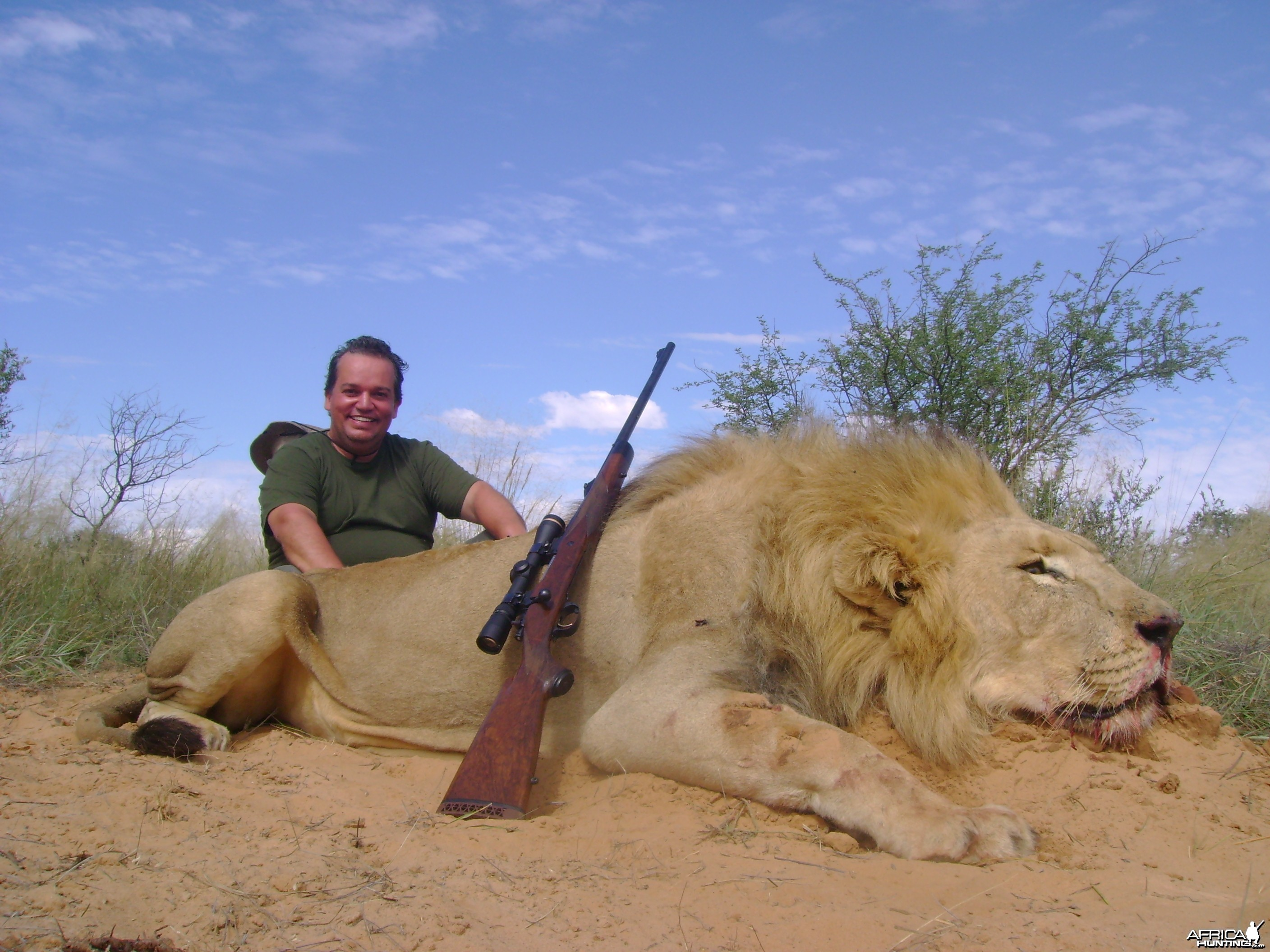 Lion hunted in South Africa
