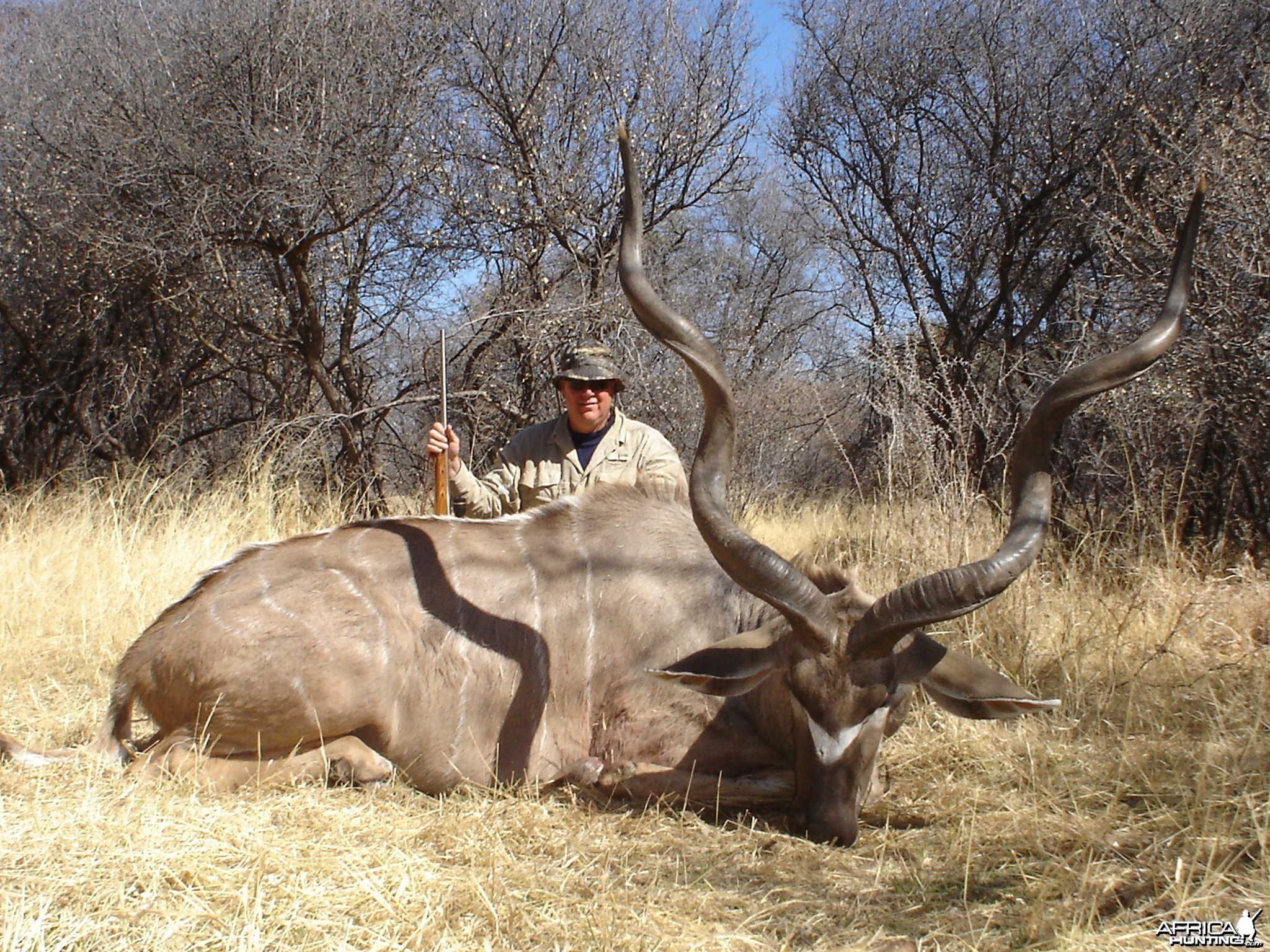 Beautiful Greater Kudu from Namibia