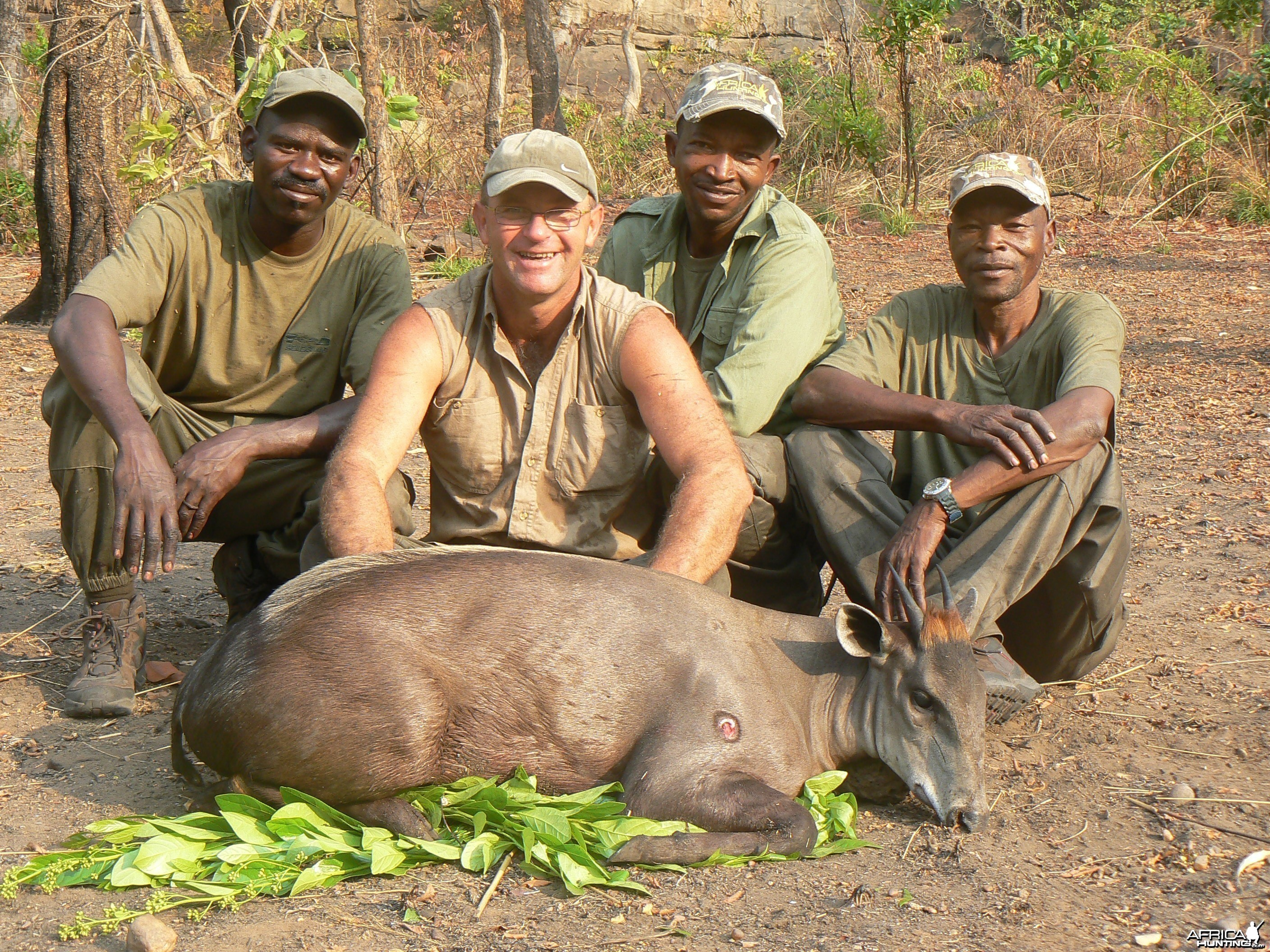 Yellow Backed Duiker, 68 kg, taken in CAR
