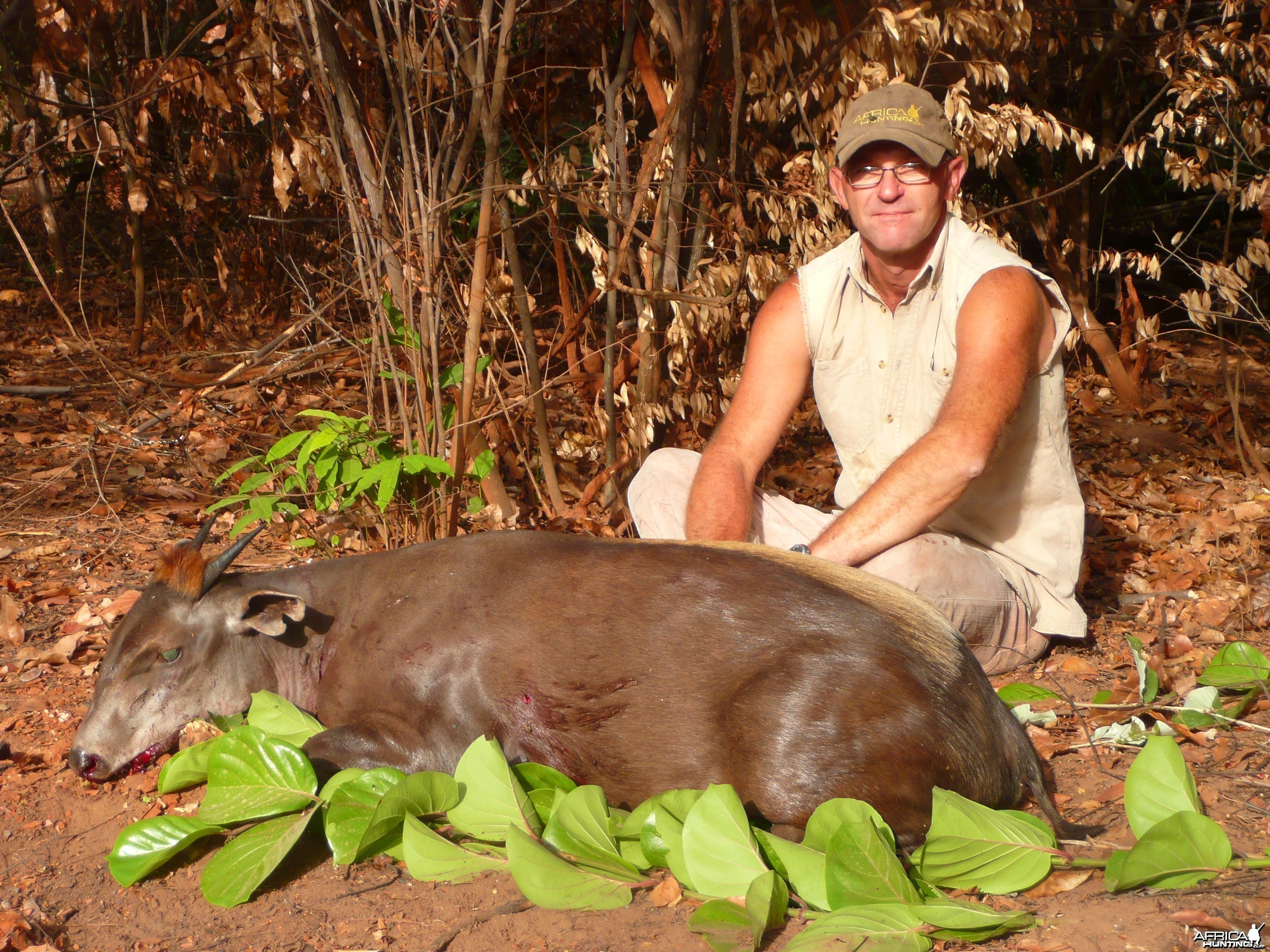 Yellow Backed Duiker, 71 kg, taken in CAR