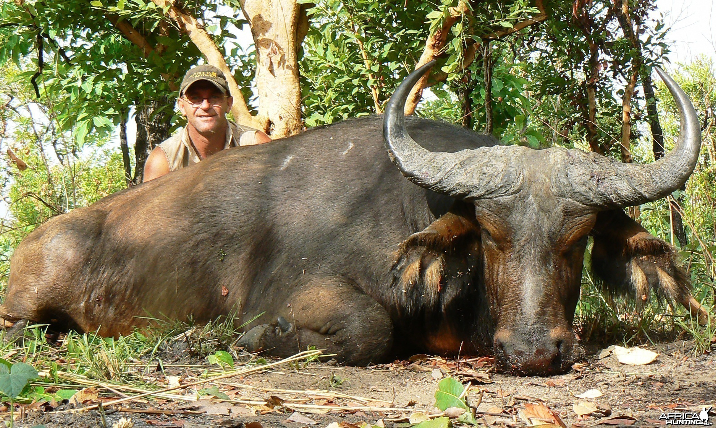Red bull 29' inches Central African Republic
