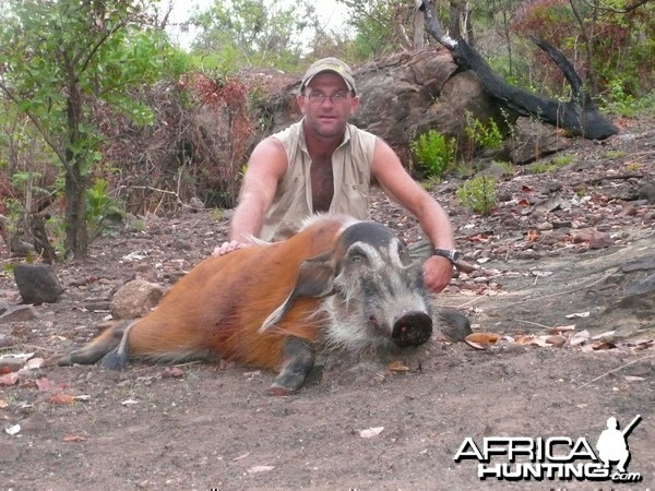 Red river hog 66kg hunt CAR