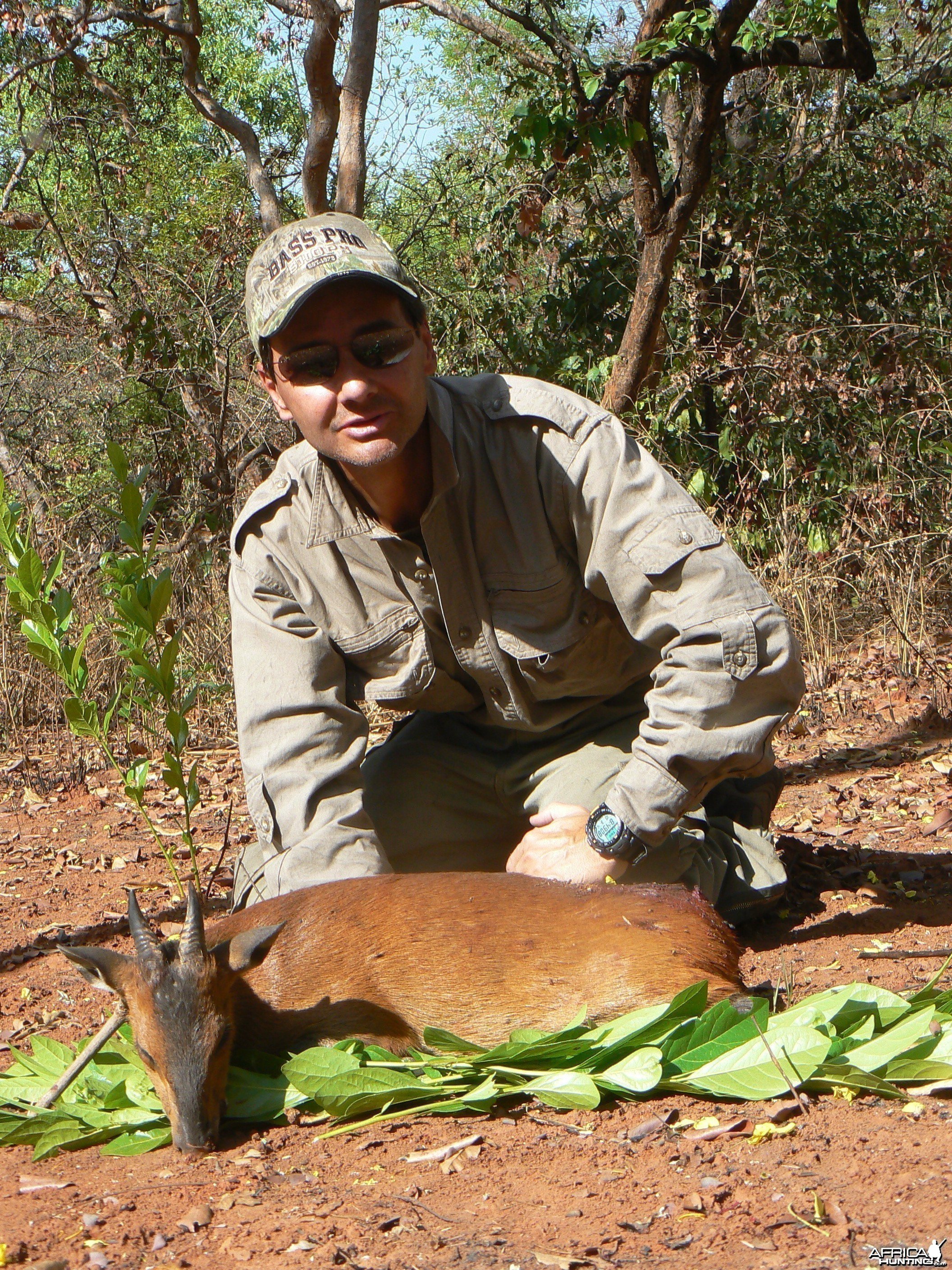 Big red flanked duiker hunted in CAR