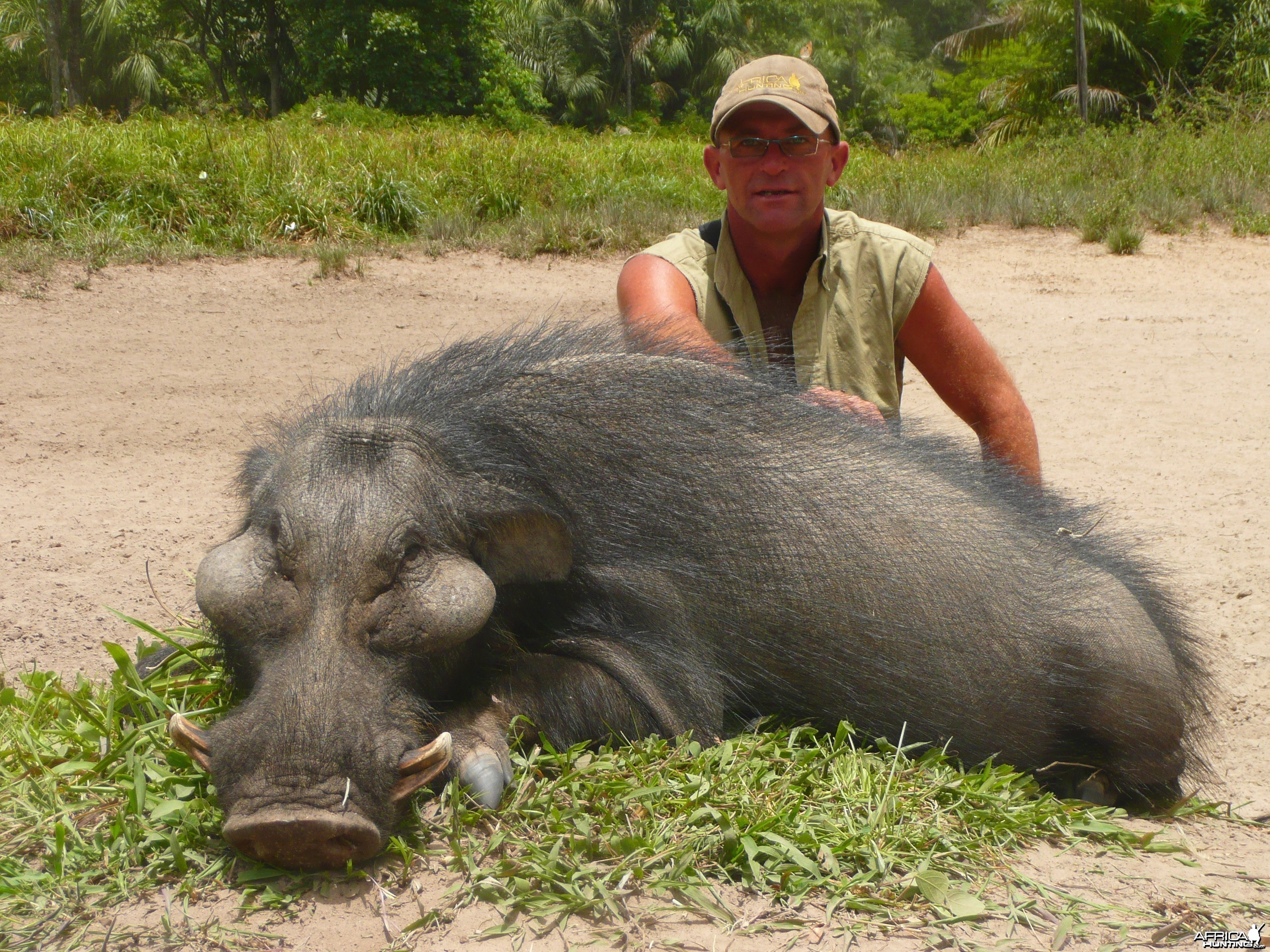 Very old giant forest hog hunted in CAR