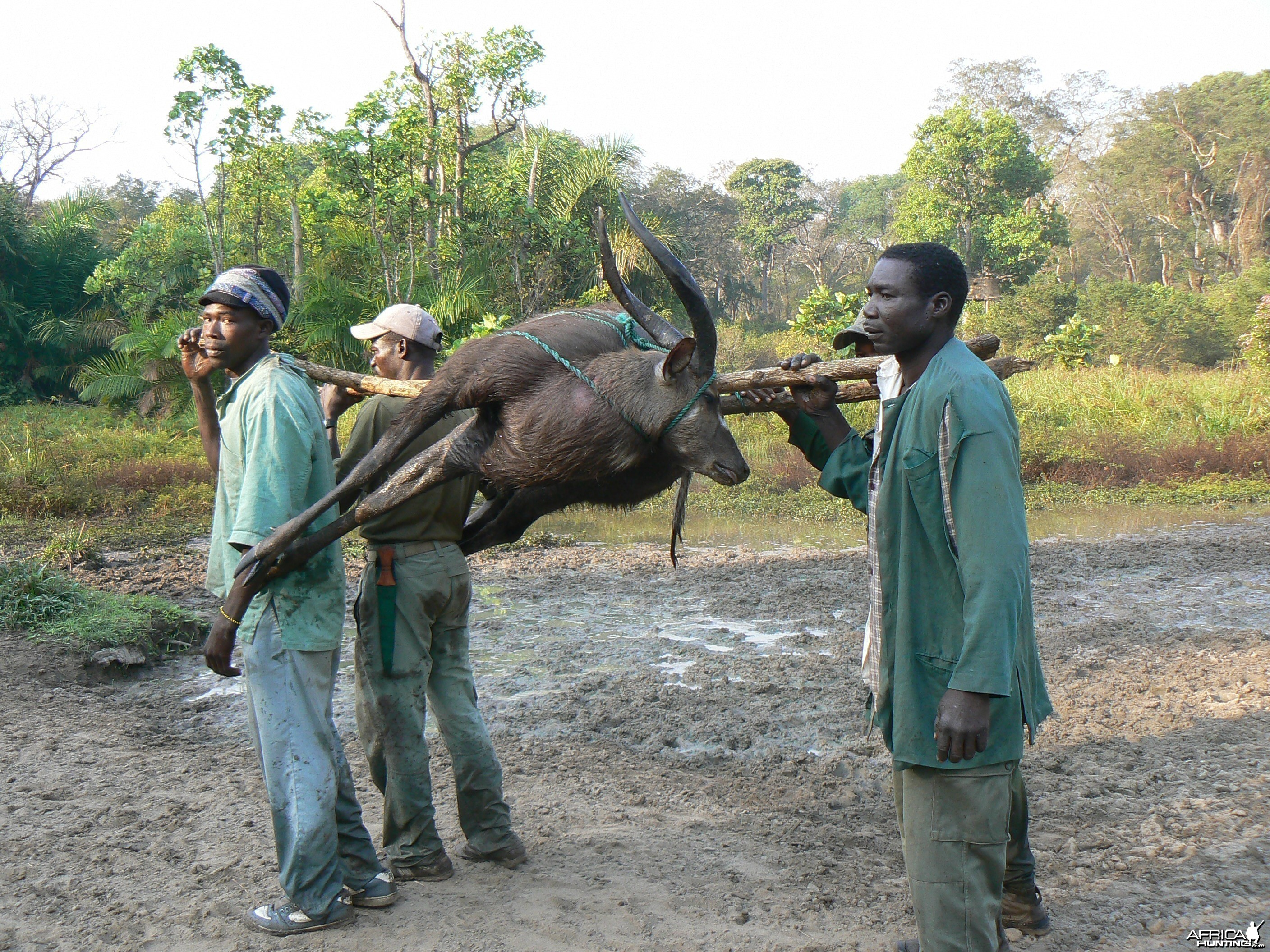 Back to the truck with a sitatunga