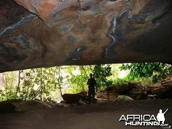 Red river hog, leopard,hyena cave in CAR!!!