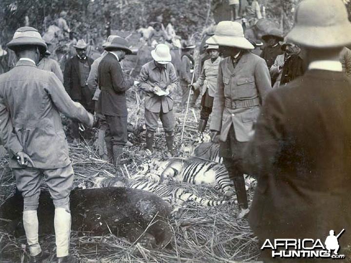 Hunting Tiger Nepal
