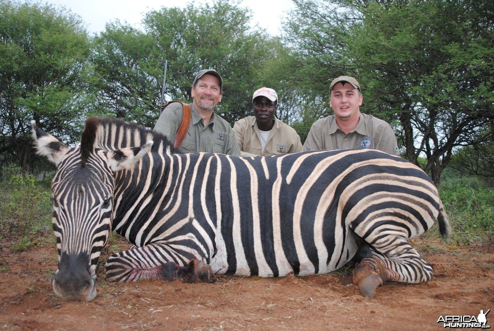Hunting Zebra South Africa