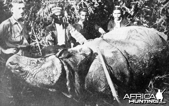 Trophy Sumatran Rhino