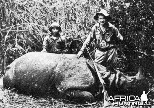 Male Javan Rhino