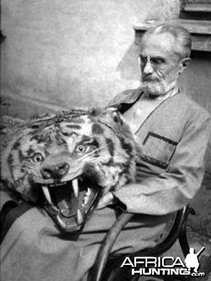 Manchurian tiger trophy