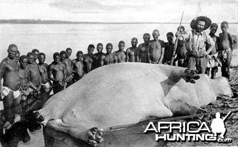 Hunting Hippo Zambezi