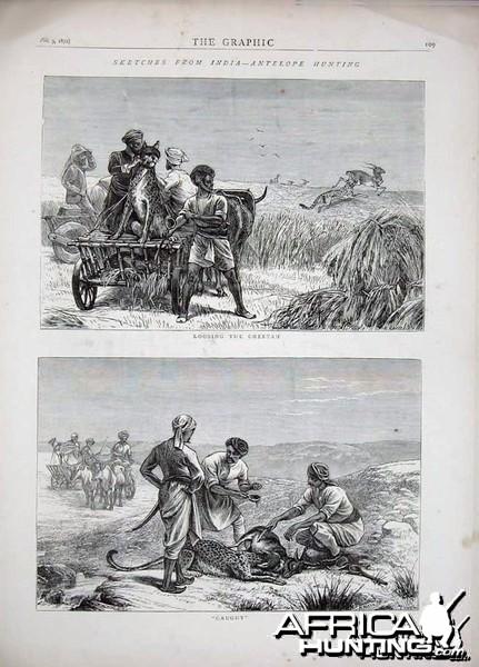 Antelope Hunting with Cheetahs, India 1872