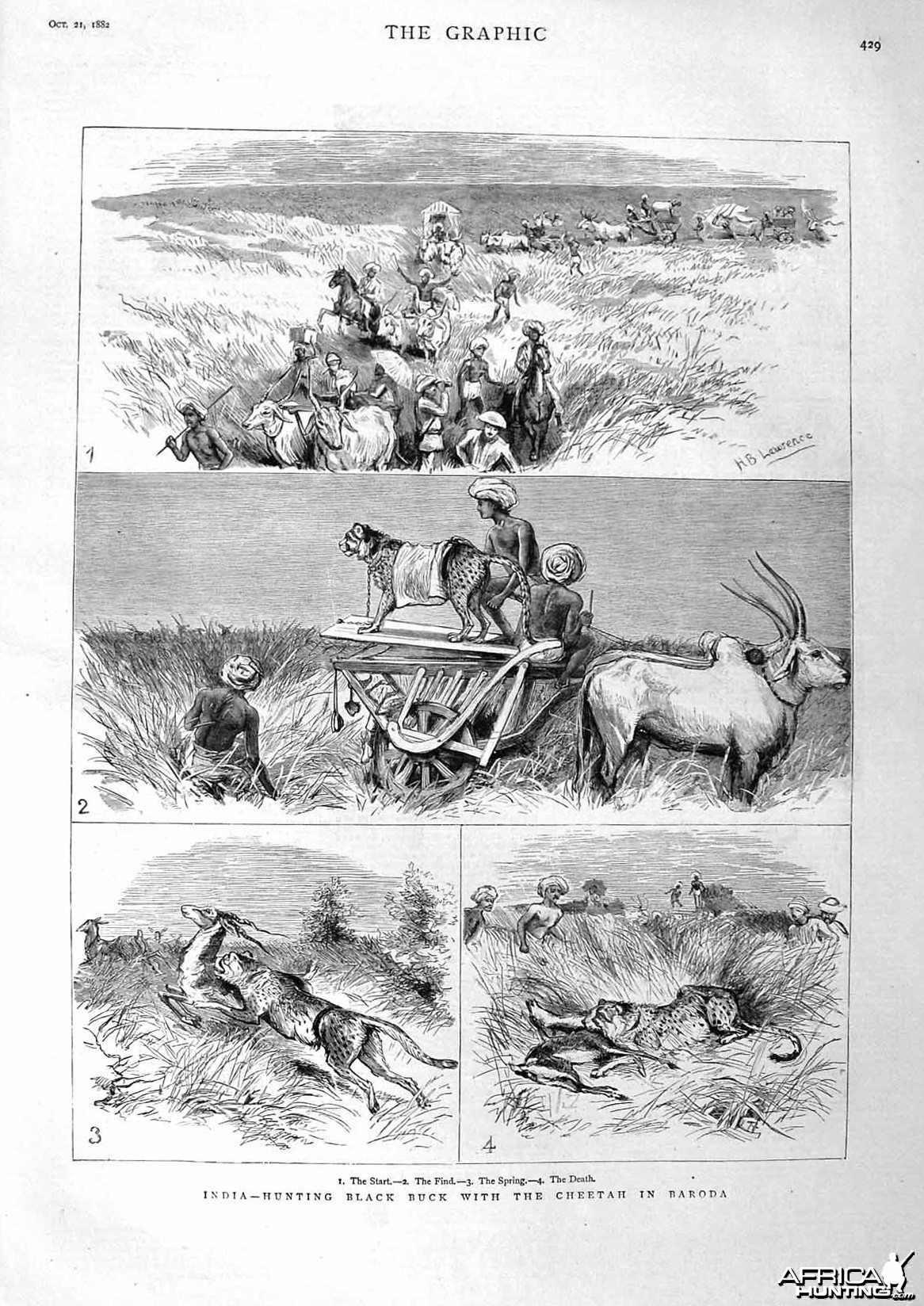 Hunting Black Buck with Cheetahs,  Baroda, India 1882
