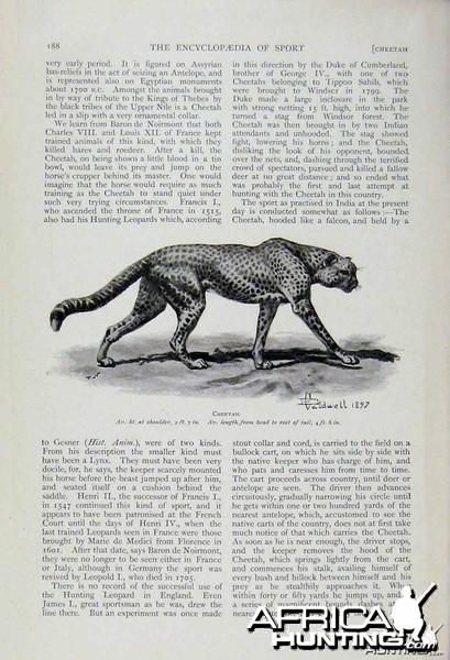 Hunting with Cheetahs