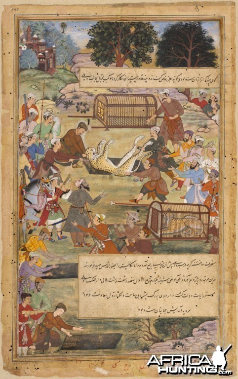 Akbar assists in capturing a Cheetah, ca. 1590-1595