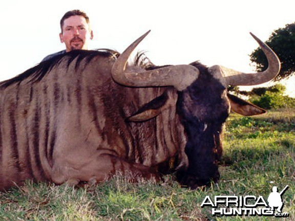 Blue Wildebeest Hunt East Cape SA