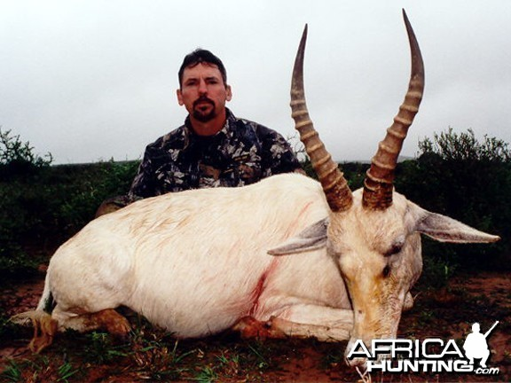 White Blesbuck Hunt East Cape SA