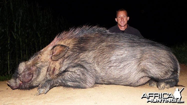 Bushpig from SA
