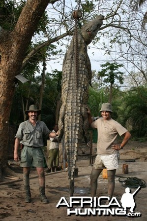 Crocodile hunted in Mozambique