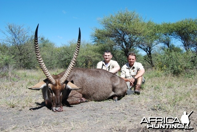 Waterbuck hunt in Limpopo RSA - 29 5/8 inches