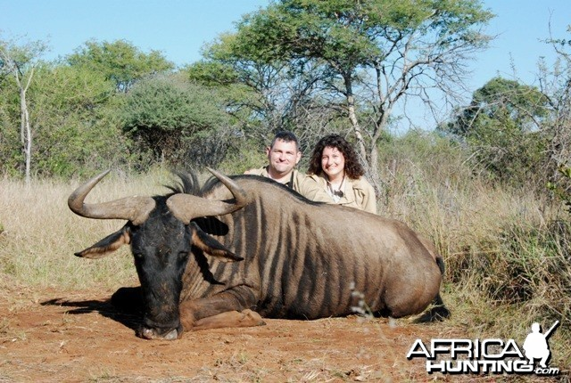 Blue Wildebeest hunt in Limpopo RSA