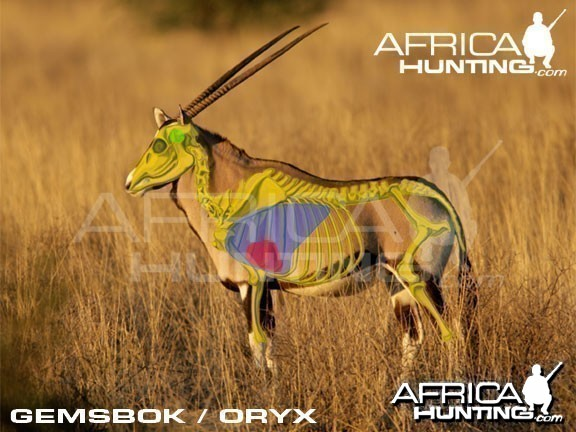 Hunting Gemsbok Shot Placement