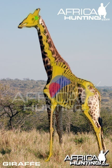 Hunting Giraffe Shot Placement
